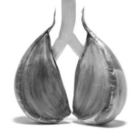 Cipolle polmone
