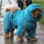 Keeway per cani