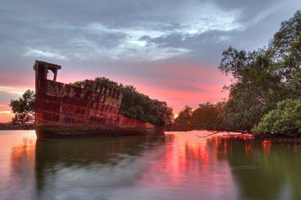 La SS Ayrfield, la foresta galleggiante di Homebush Bay, Sydney, Australia