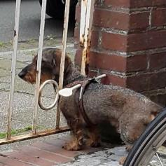 Mestolo anti-evasione canina