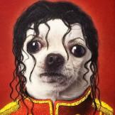 Michael Jackson barboncino