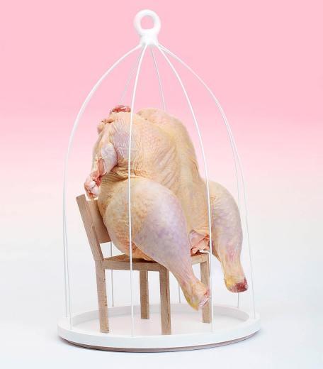 Pollo in gabbia