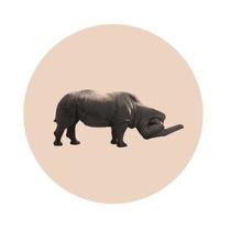 Rinoceronte dito medio
