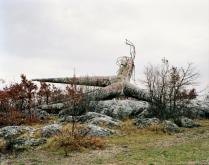 Spomenik #12 (Košute), 2007