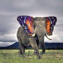 Elefante farfalla