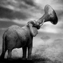 Elefante trombone