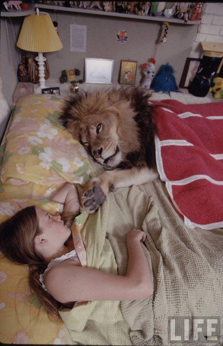 Melanie Griffith a letto con il suo leone domestico, 1970