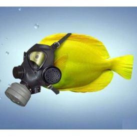 Pesce con la maschera anti-gas