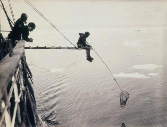 Pesca di macro-plancton. Fotografia di Frank Hurley