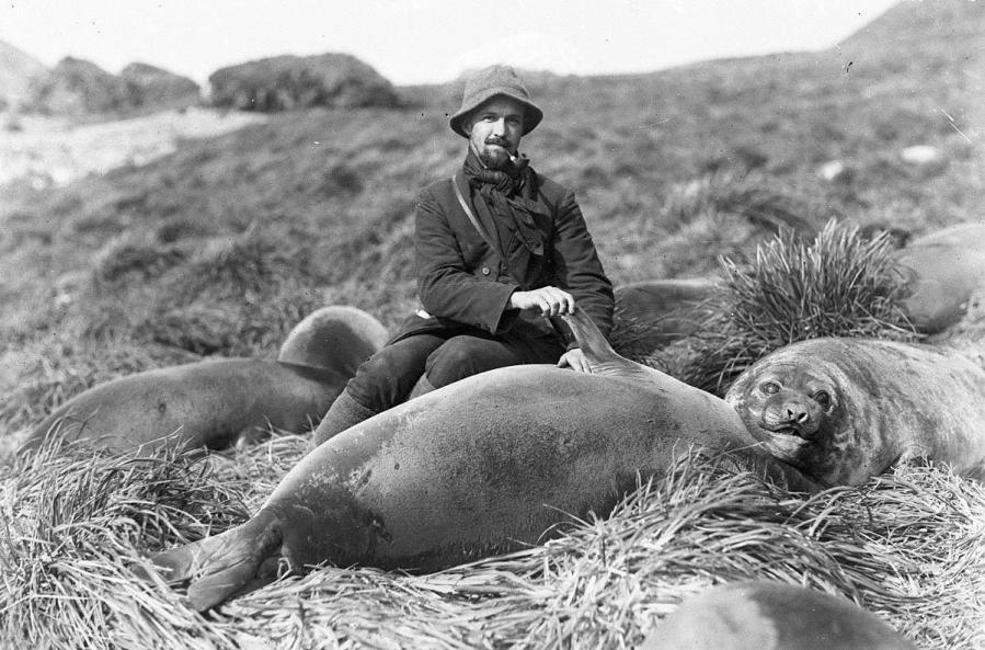 Arthur Sawyer e cucciolo di elefante marino. Fotografia di Frank Hurley