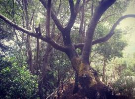 L'albero degli abbracci