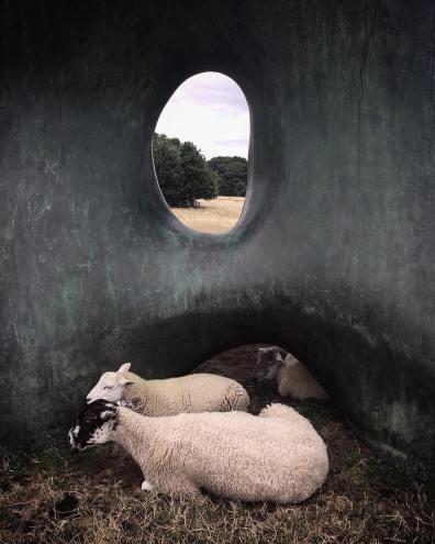 """Il famoso Yorkshire Sculpture Park nel Regno Unito comprende tanti capolavori come il monumentale bronzo di Henry Moore """"Large Two Forms"""", un rifugio preferito per le pecore del parco che amano coccolare il lavoro. Fotografia di Jennie McCall"""