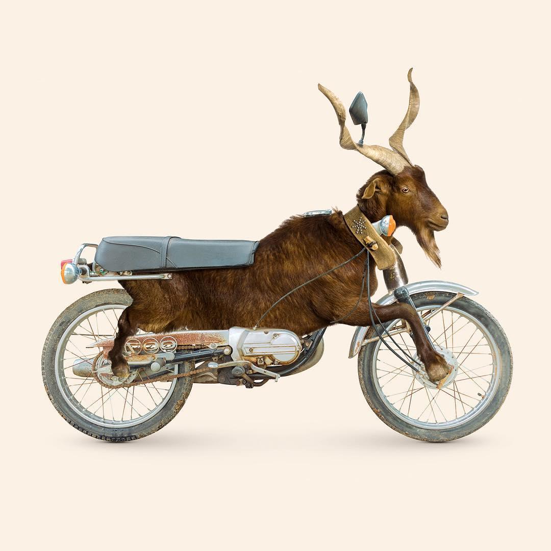 Les Créatonautes - Goatorcycle
