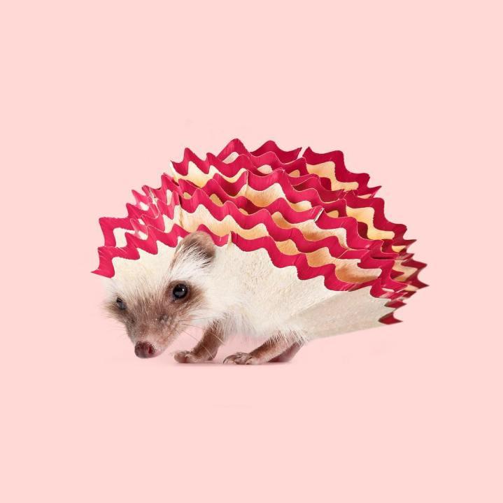 Les Créatonautes - Hedgehog sharpener