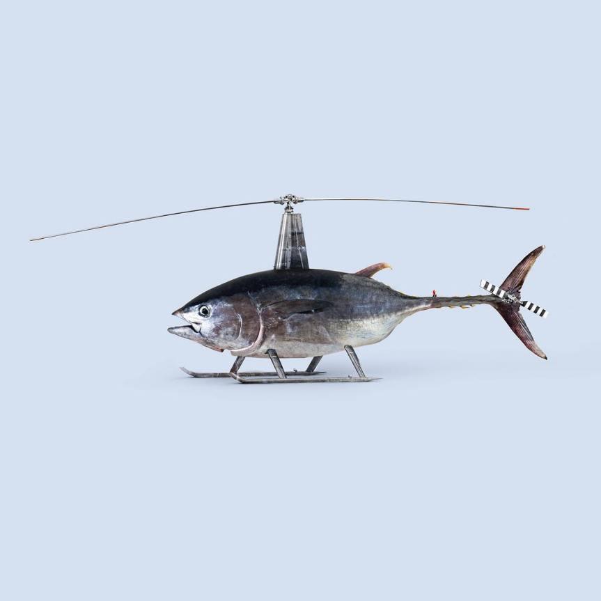 Les Créatonautes - Poisson volant