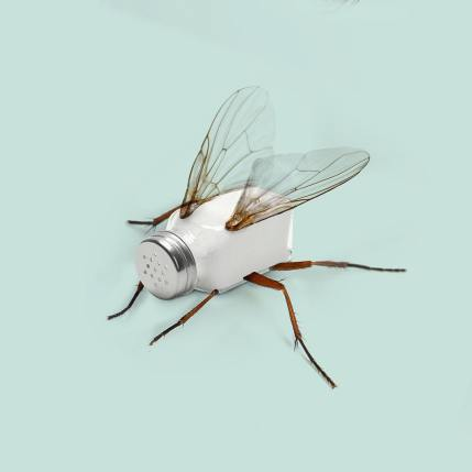 Les Créatonautes - Salty fly