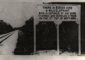 Un elefante deragliò un treno mentre difendeva la sua mandria in Malesia, causando 2 morti, 1894