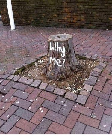Why me? (Author unknown)