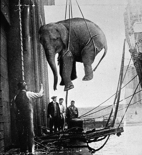 Trasporto di un elefante da circo. I primi anni '30