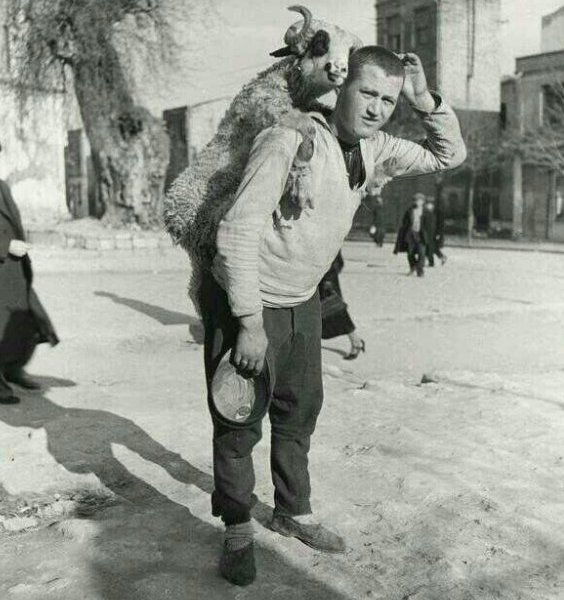 Un uomo con una pecora sulle spalle in un mercato di pecore in Turchia, negli anni '30