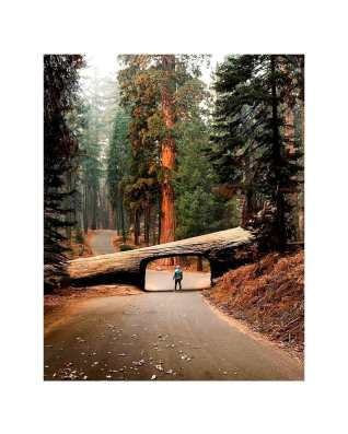 Sequoia National Park @, USA California