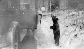 Una donna che dà da mangiare a un orso, Washington, 1927