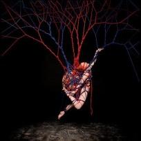 Anatomy of the Heart by Garth Knight