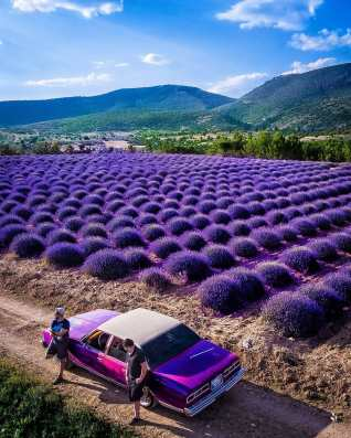 Lavender Town exists and it's in Turkey! Photo by Adem Axoi In the Isparta province, you'll find the mesmerizing village of Kuyucak. There are only around 90 households, and most of the villagers make a living through lavender cultivation.