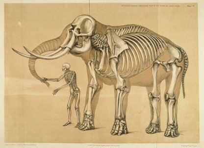 Vista comparativa del telaio umano e quello elefante, dello scultore inglese e artista di storia naturale Benjamin Waterhouse Hawkins