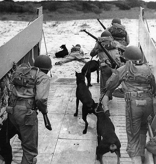 13 marzo 1942, l'esercito americano lancia il K-9 Corps