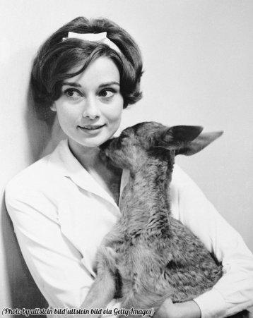 Audrey Hepburn riceve un bacio dal suo cerbiatto, 1958