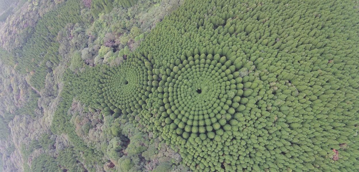 Cerchi nel grano Giappone - Image courtesy FNN