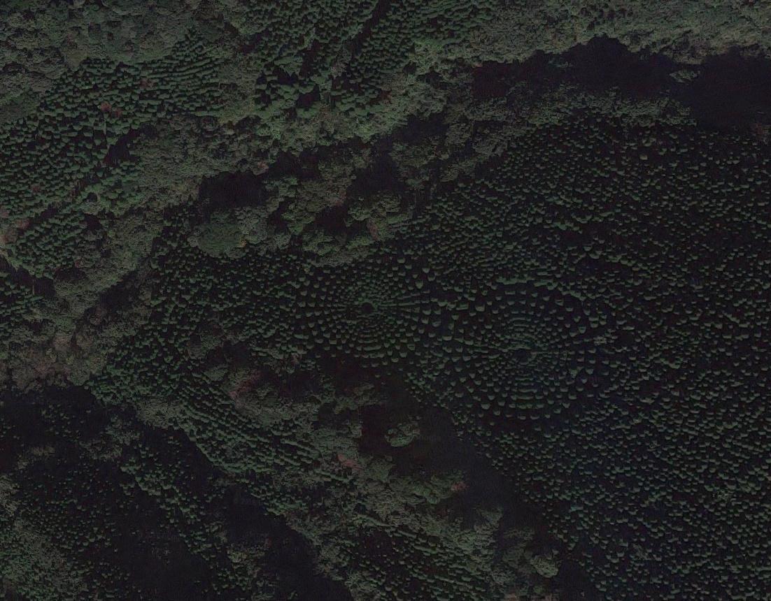 Cerchi nel grano Giappone - Image courtesy Google Earth