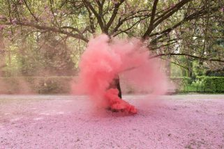 """The Blossom Project"" by Isabelle Chapuis and Alexis Pichot"