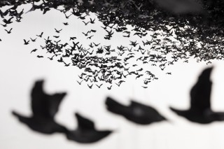 """Murmuration"" by Cai Guo-Qiang"