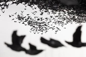"""""""Murmuration"""" by Cai Guo-Qiang"""