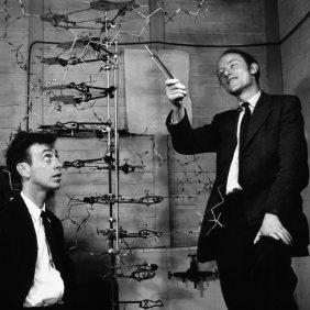 Watson e Crick scoprono la struttura del DNA nel 1953. Altri scienziati, come Rosalind Franklin e Maurice Wilkins, hanno contribuito a questa scoperta