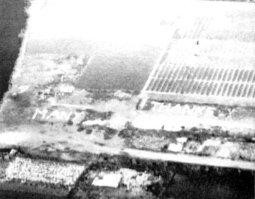 """""""Molte grazie"""" scritto a tulipani per gli equipaggi dei bombardieri alleati che effettuavano cessioni alimentari per alleviare la carestia nell'Olanda occupata dalla Germania, 1945"""