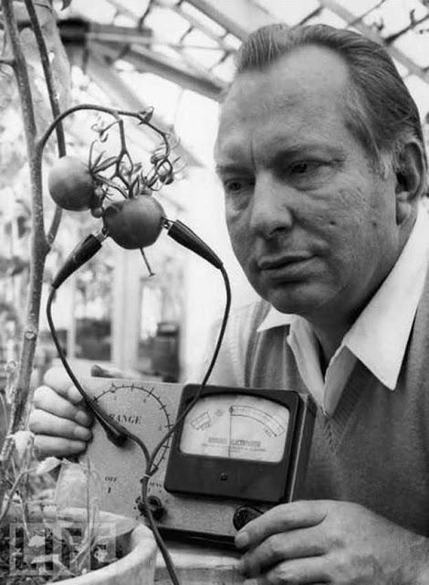 Elettrometro Hubbard per misurare il livello di dolore avvertito da frutta e verdura