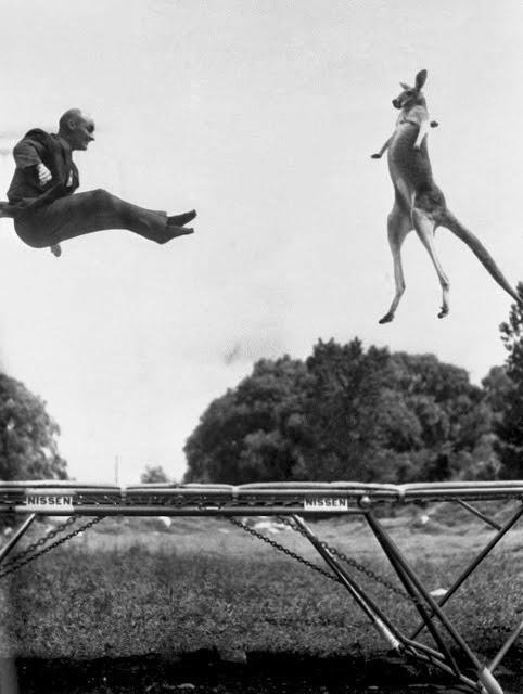 7 luglio 1960: Victoria, il gigantesco canguro rosso salta sul tappeto elastico con George Nissen, colui che l'ha inventato