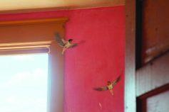 Kyle Thompson, Bird Nest, Elsworth SD (2019), stampa Fine Art su dibond, 60 x 90 cm