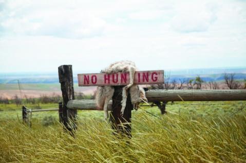 Kyle Thopmson | Coyote, Oregon Grasslands / 2019 / Stampa Fine Art su dibond / 60x90 cm