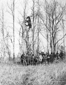 Cavallo morto portato sull'albero da un'alluvione, vicino a Louisville, Kentucky, 1937