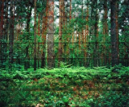 Diane Meyer - Forest Border Area Near Hohen Neuendorf