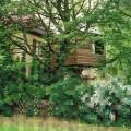 Diane Meyer - Treehouse Former Wall Area Frohnau