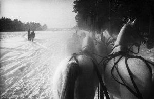 Inge Morath - USSR. Piatnika. Five horse sleigh on a stud farm 40 miles west of Moscow. 1965
