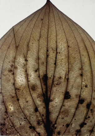 Nino Migliori, Herbarium, 1974, C-print vintage-unicum su supporto legno, 140×100 cm © Fondazione Nino Migliori