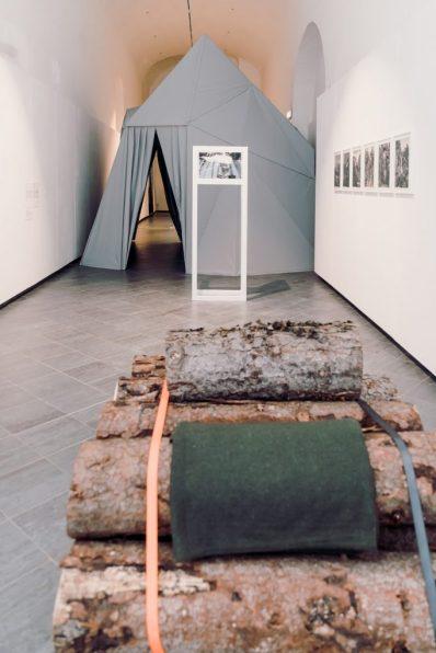 Tree Time, 2019, veduta della mostra presso il Museomontagna