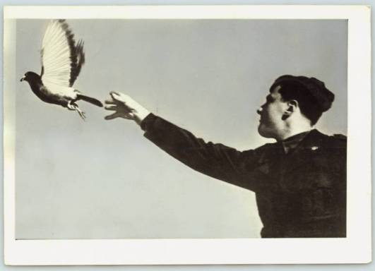 Lancio di un colombo viaggiatore, 1946, courtesy Touring Club Italian
