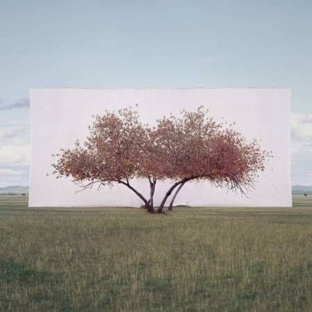 Myoung Ho Lee, Tree... #2, 2011 © Myoung Ho Lee